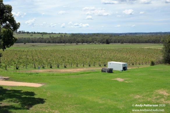 Hope winery vines