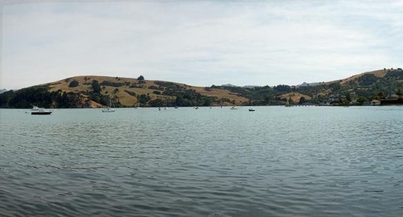Included Akoroa panorama