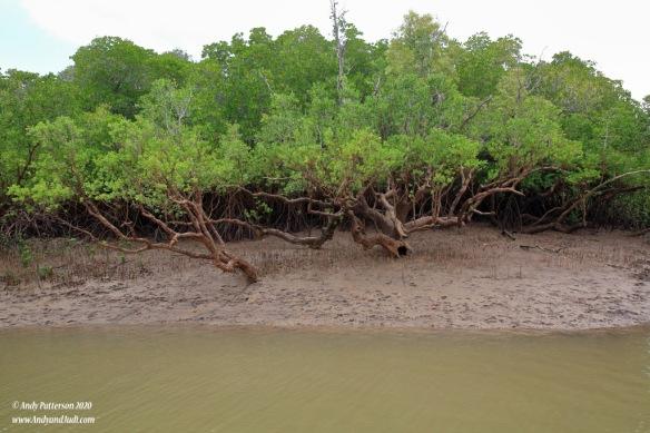 Mangrove swamp 2