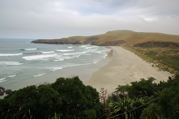 Penguin sanctuary beach from lookout 3