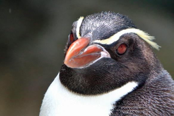 Penguin sanctuary close-up 2