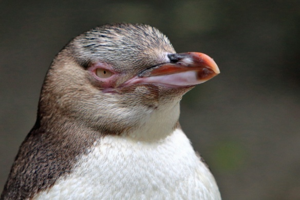 Penguin sanctuary close-up 3