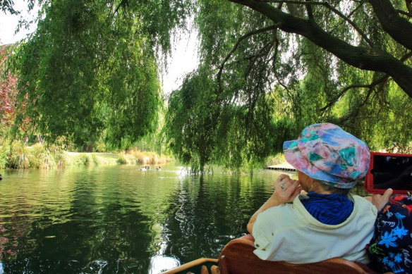 Punting 7 passing under willow tree
