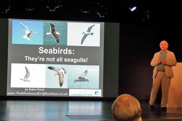 Robin Petch Presentation on Seagulls