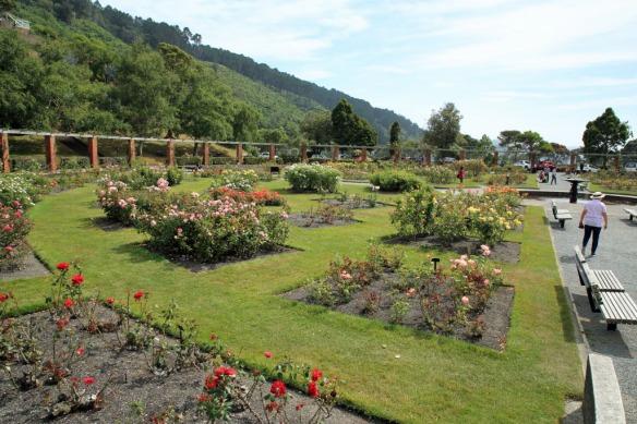 Rose Gardens 1