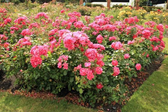 Rose Gardens 4