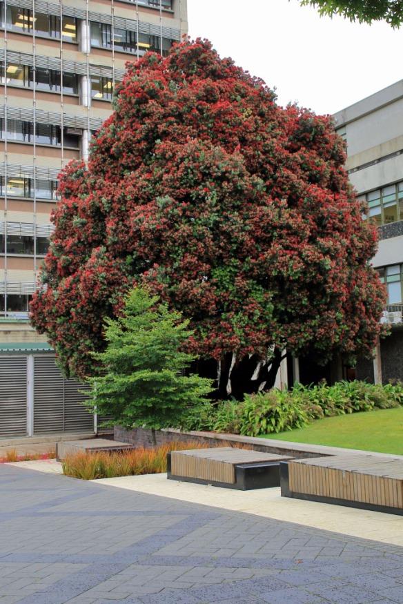 University Kiwi Christmas Tree