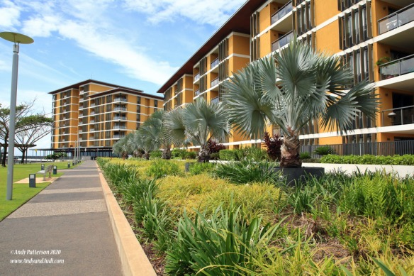 Waterfront condos with fan palms