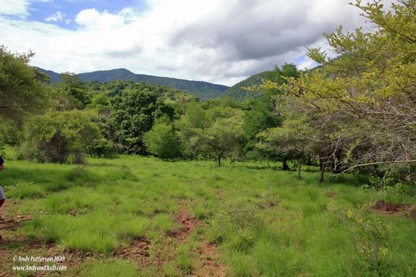 Bonus trail looking back down trail