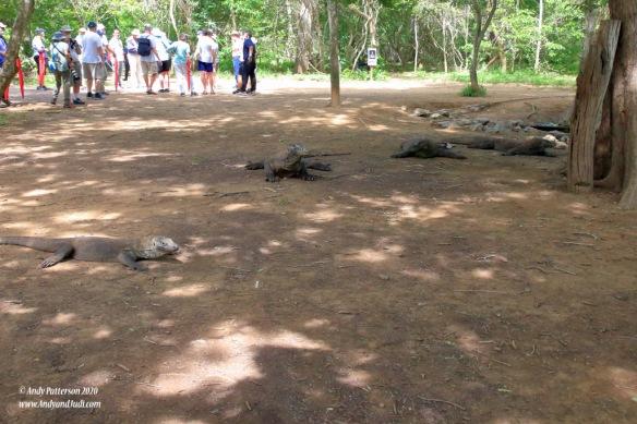 Dragons at watering hole 8