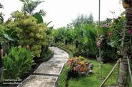 Orchid garden garden path
