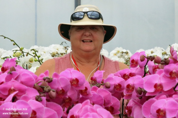 Orchid garden Judi in sea of orchids