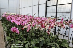 Orchid garden nursery