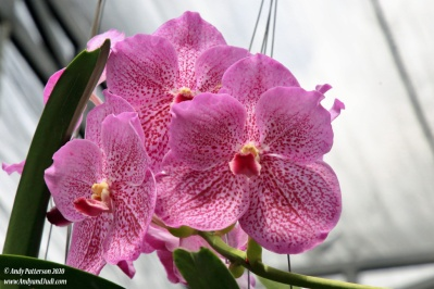 Orchid garden pink orchids 4