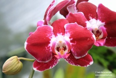 Orchid garden pink orchids 5