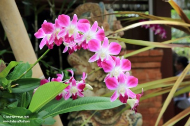 Orchid garden pink orchids